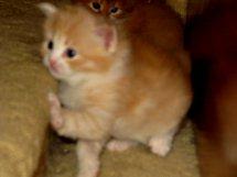 Simba is 4 weeks old