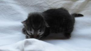 Baby Boy born 12:22 a.m., February 24, 5 oz.