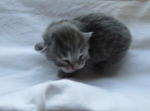 Baby Girl born 1:10 a.m. February 24, 4 oz.