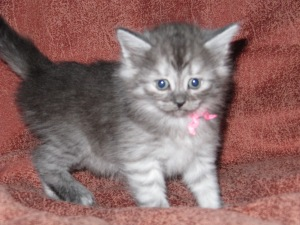 Available Female, Majya (temporary name)