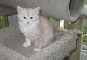Bo at 7 weeks old