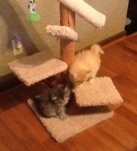 Leo's and Dax's favorite cat tree