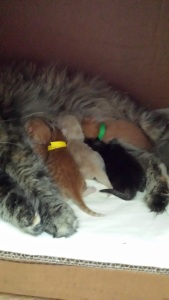 Zhaklin and her 5 precious babies