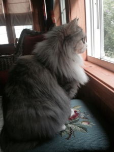 Loves looking out the window at the squirrels.