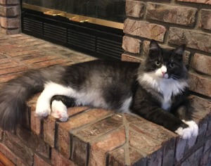 Gorgeous Niko relaxing on the hearth.