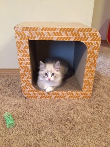 From Megan: just wanted to update you and send you these adorable pictures. Btw, I got this scratching box at Target ( I think for 20$) and he loves it. It's multifunctional as well, if any other kitten parents are looking for scratching post ideas.