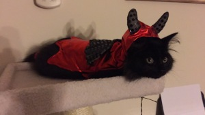 "Salem is dressed up as a little ""devil"" :) Oh dear, Brooke, are you saying he is a little devil. Not a Siberian - Never! LOL"