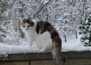 Liliya (Lily)