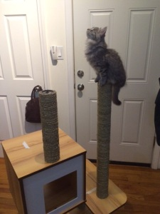 Dora can't wait until Matthew finishes putting the cat tree together.