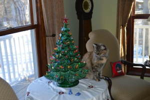 Zhaklin and our Christmas tree--no ornaments to knock off!