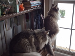 Mishka and Talya watching the birds and the snow.