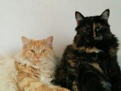 Buster and Freya
