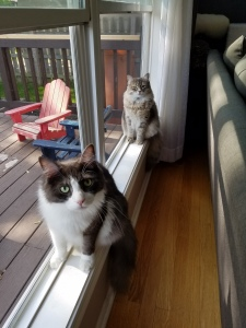 Window sills are the very best place to watch the world! Lincoln and Kona