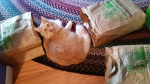 "Gingie says ""So many bags, so much time to play!"" Thanks Christy for another photo of The Magnificent One!"