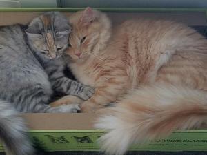 Niko and Samara