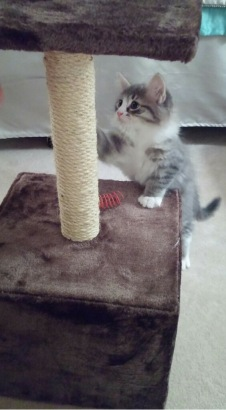 Likes all his scratching posts.