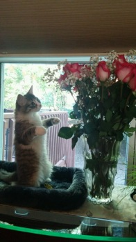 Are these flowers for me?