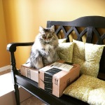 "Pashka...""I assume these boxes are for me!"" She is Siberian sister to Katya and also loved by Debbie and Dan."