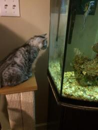 rizzo-and-fish-tank