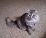 """Rasputin from Chuck and Vicki """"Hope you are healing well after your surgery, Chuck."""""""