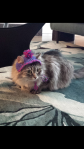 Elsa looks ready for the snow in her new hat!. Thanks Caitlin!