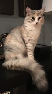 Lulu, age 6 months