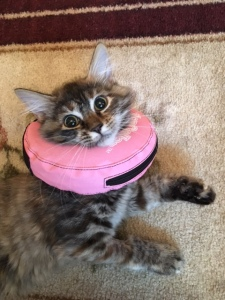 Michelle found this donut collar. She did not like it at first but once she got used to it, she could get around with no problem.