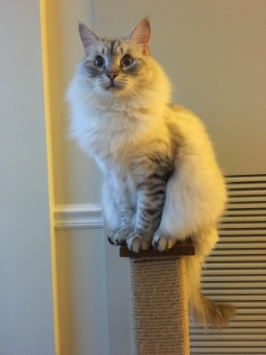 Scratch Post Perch