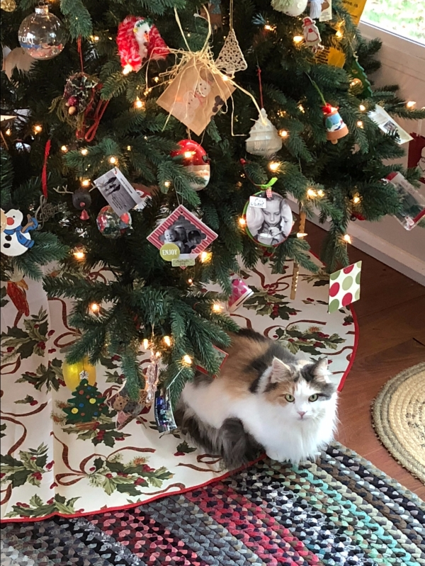 Lily 2017 Christmas in her new home